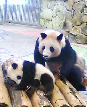 090118_panda_massage.jpg